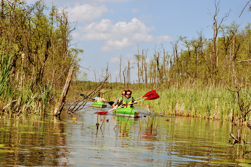 Zielonka Forest Canoeing Route (Photo by Archive of Sports and Recreation Community Centre in Pobiedziska)